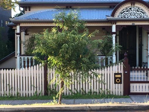 Tamarind tree Dornoch Terrace