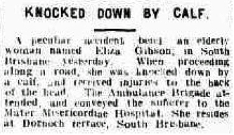 Woman knocked down by calf 1916 Highgate Hill