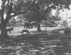 circus animals musgrave park 1962 bcc