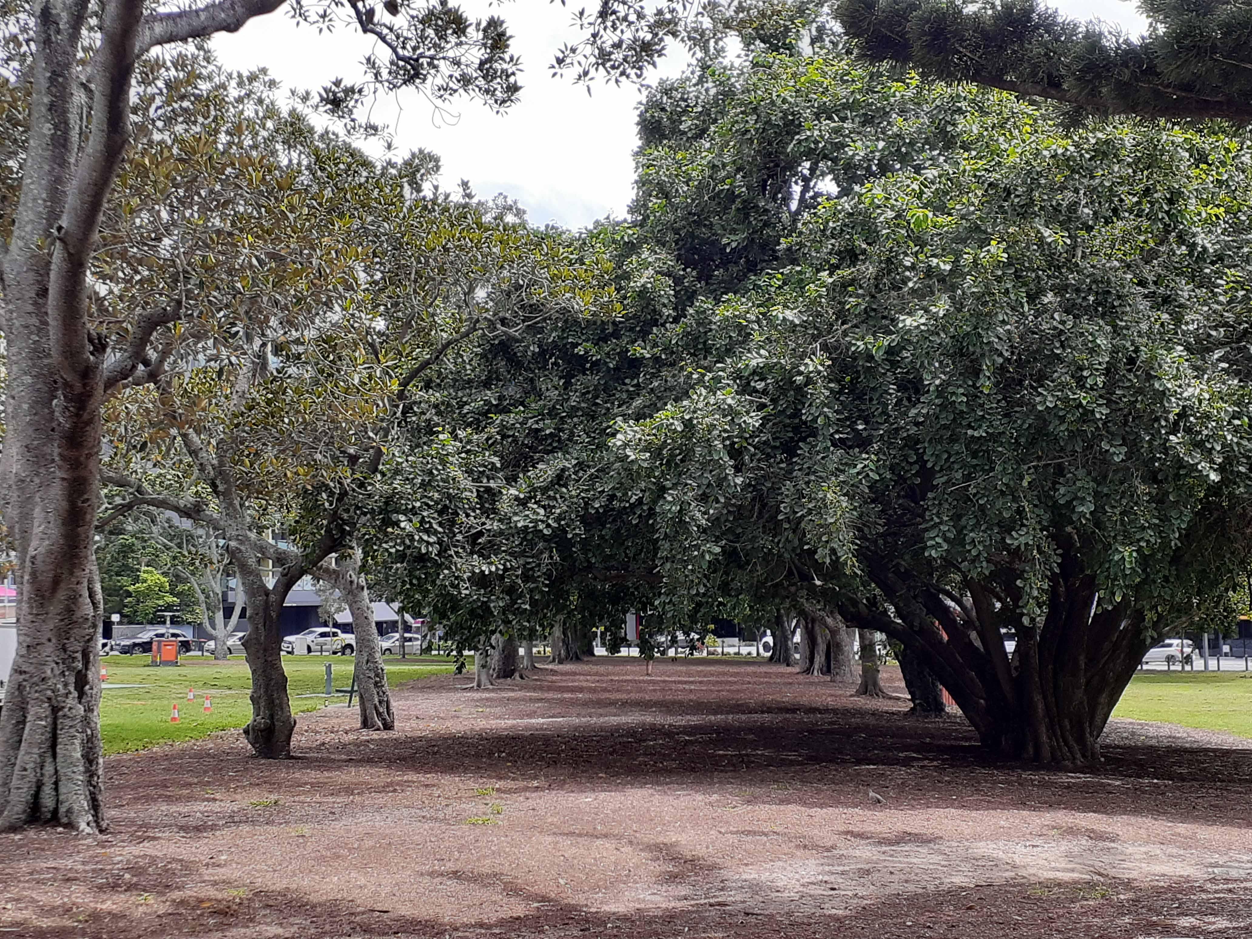 musgrave park avenue