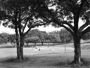 Cricket in Musgrave Park, 1950 (brisbane City Council)
