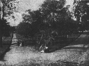 Musgrave Park 1925