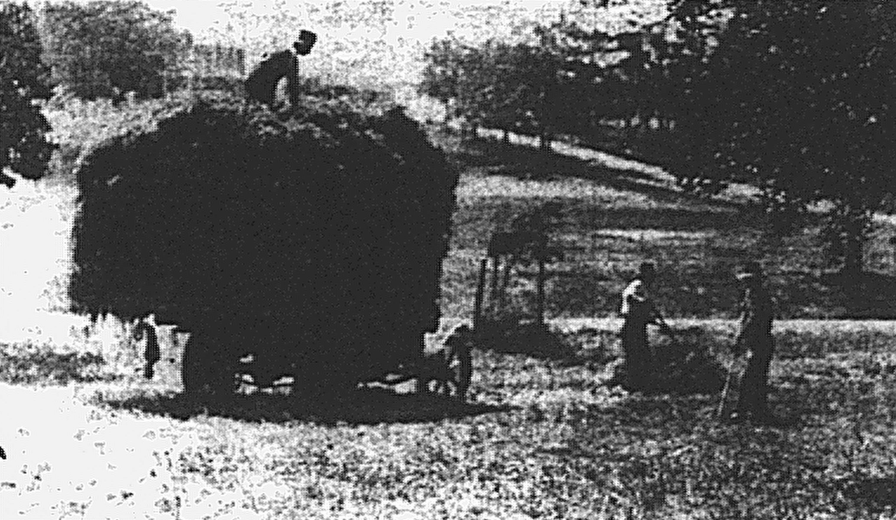 Grass removal Musgrave Park 1926