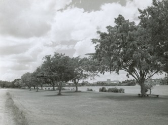 Orleigh Park in 1959. (Fryer Library UQ)