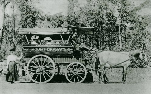 Horse bus transporting passengers at Mount Gravatt slq blog