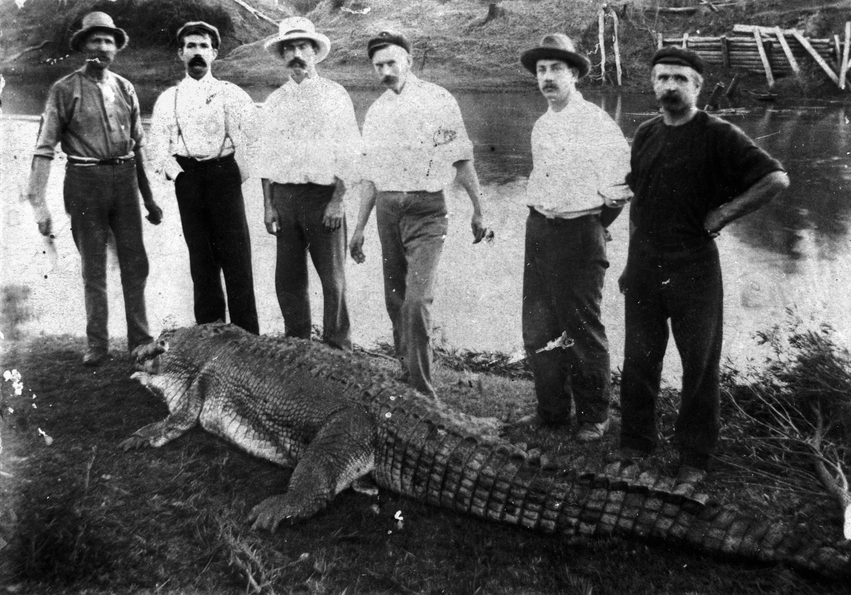 Crocodile shot in the Logan River near Logan Village Queenslander 8 July 1905