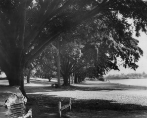 The river bank at Davies Park in 1950, (Brisbane City Council)